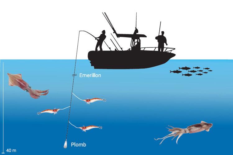 Comment pêcher les calamars