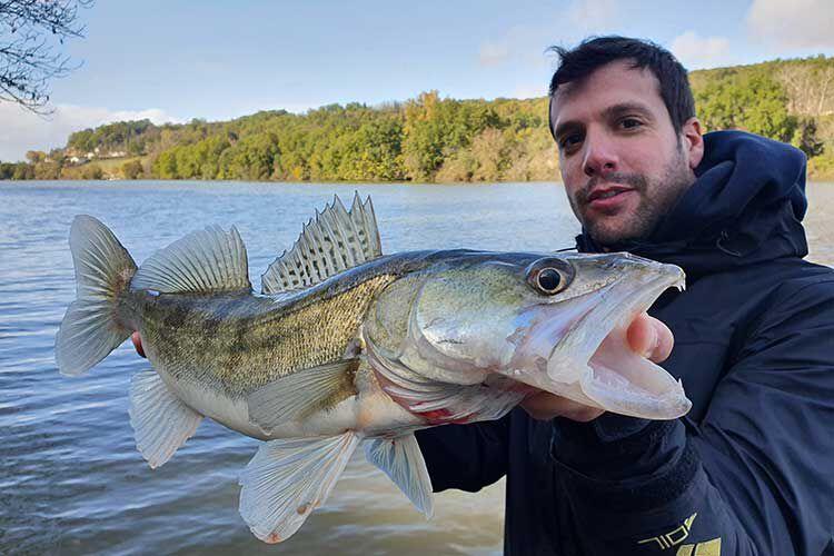 La pêche du sandre en rivière