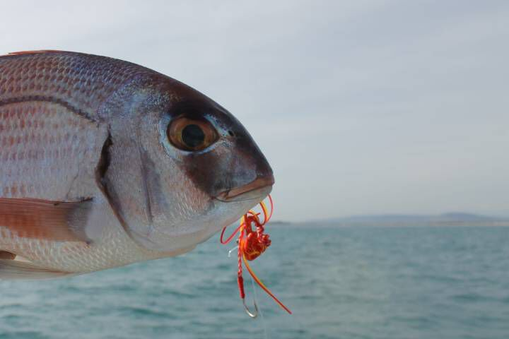 Pêche au tenya