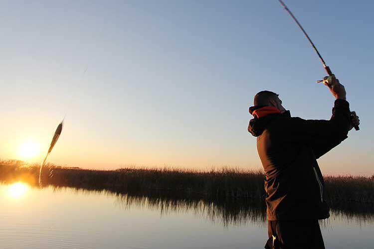 Choisir sa canne pour la pêche aux carnassiers