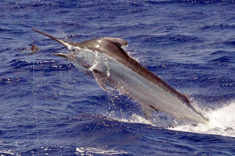 Voyage de pêche aux Maldives