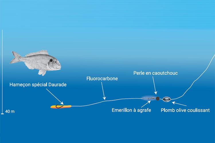 Comment pêcher la daurade