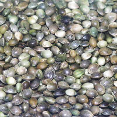 Graine sèche coup active baits chenevis amorcage - Graines à préparer | Pacific Pêche