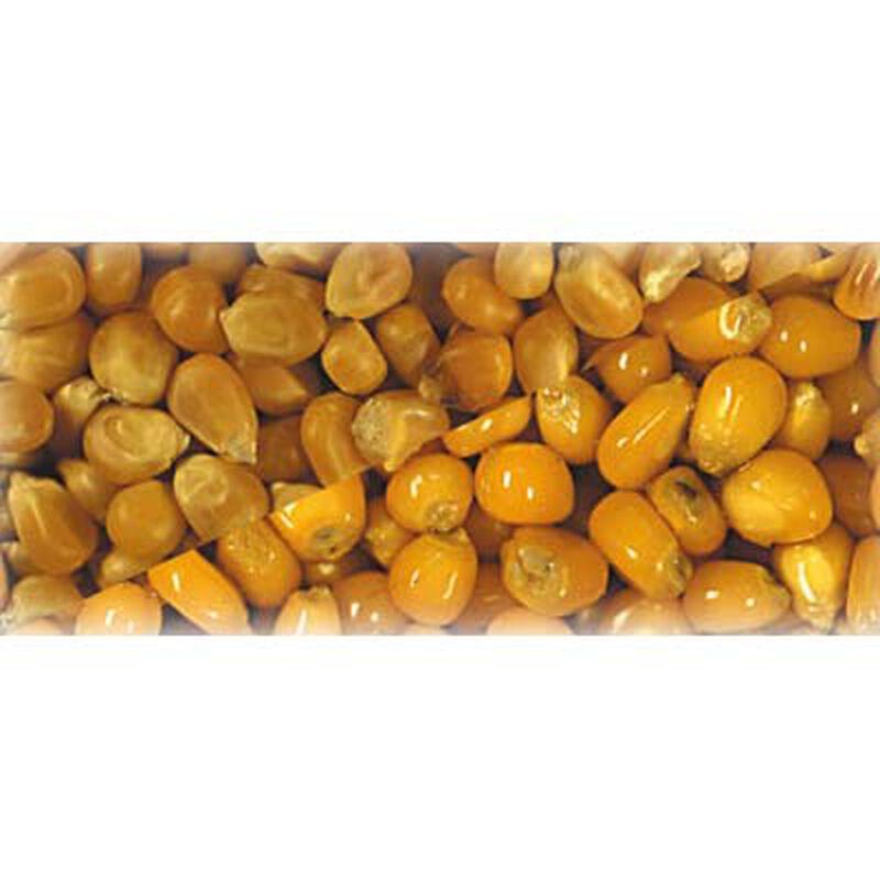 Graines sèches carpe mais grain - Sèches | Pacific Pêche