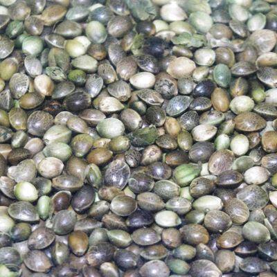 Graine sèche coup active baits chenevis amorcage 5kg - Graines à préparer | Pacific Pêche