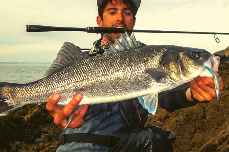 La pêche du bar au lancer Conseils I Pacific Pêche