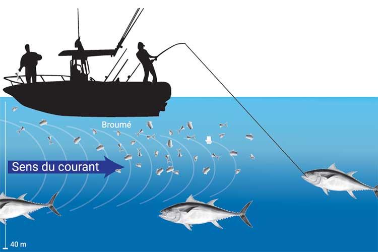 La pêche du thon rouge  I Pacific Pêche