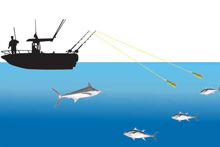 La pêche à la traîne Conseils I Pacific Pêche