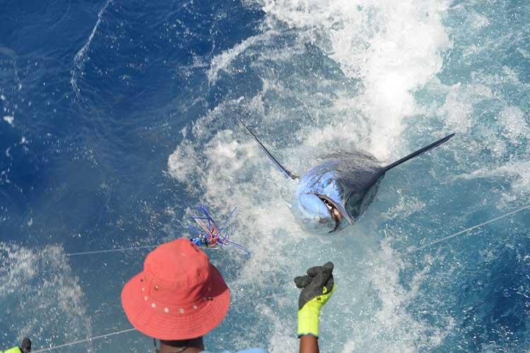 Pêche au Panama I Pacific Pêche