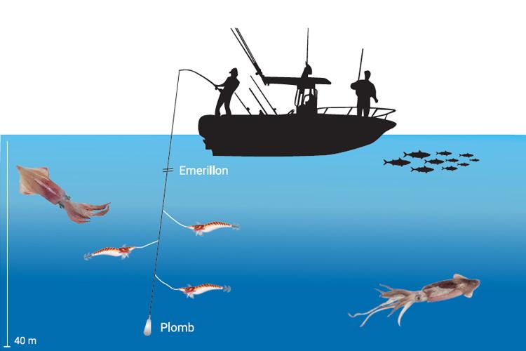 Comment pêcher les calamars Conseils I Pacific Pêche