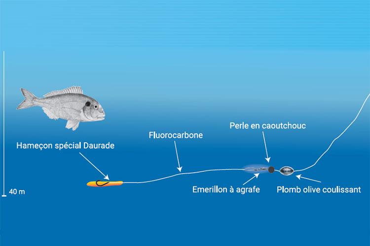 Comment pêcher la daurade Conseils I Pacific Pêche